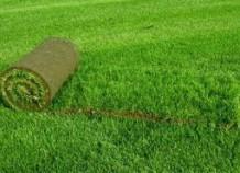 Особенности рулонного газона