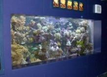 Что такое аквадизайн?